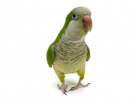 韩国最新鸟类鹦鹉图库素材