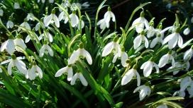 https://www.2008php.com/2011年欧美高清晰植物园-春天气息摄影图片