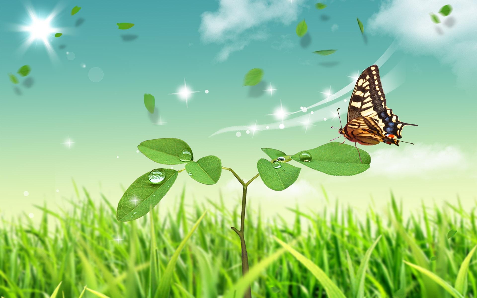 蝶舞 高清晰昆虫摄影之蝴蝶壁纸 手机移动版
