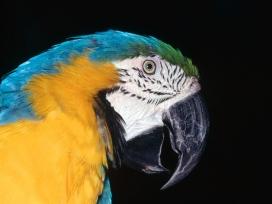 高清晰鹦鹉-鸟类企鹅图片