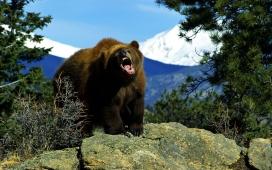 高清晰大自然动物摄影-动物的呼喊