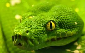 大自然高清晰野生绿蟒蛇摄影图