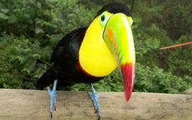 高清晰脊椎动物飞鸟类壁纸-鸟