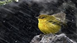 高清晰鸟类摄影壁纸