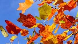 https://www.2008php.com/秋天-五颜六色的树叶