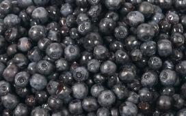 高清晰黑色的蓝莓水果壁纸