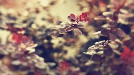 https://www.2008php.com/高清晰小红色的树叶壁纸