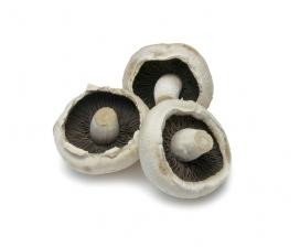 白色蘑菇香菇素材图