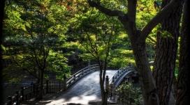 树林里的小石拱桥