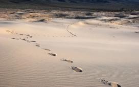加利福尼亚凯尔索沙丘沙漠脚印