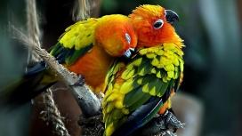 卿卿我我抓痒的parrots鹦鹉