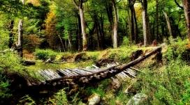 森林木桥壁纸