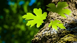 https://www.2008php.com/阳光映射下的绿色树叶和苔藓