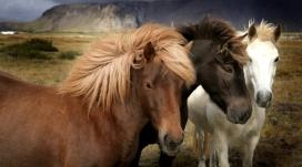 马匹-黑白棕颜色骏马壁纸