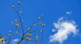 https://www.2008php.com/蔚蓝的天空和黄色的花朵
