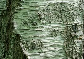 高清晰厚实裂痕树皮壁纸