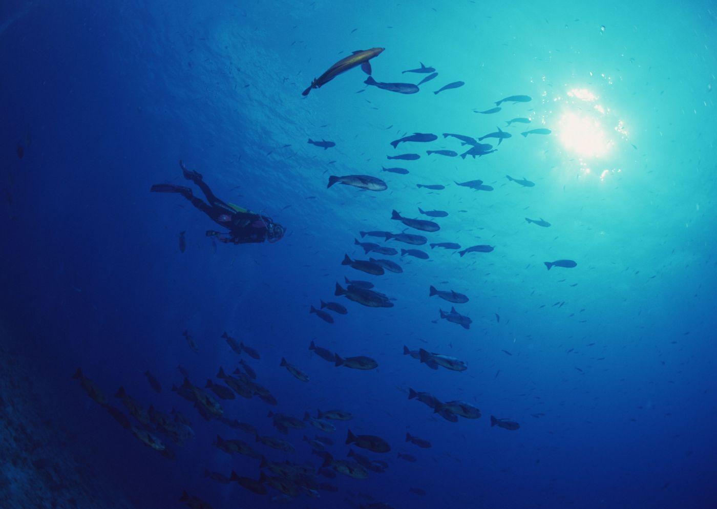 高清晰深海群鱼寻食壁纸 手机移动版
