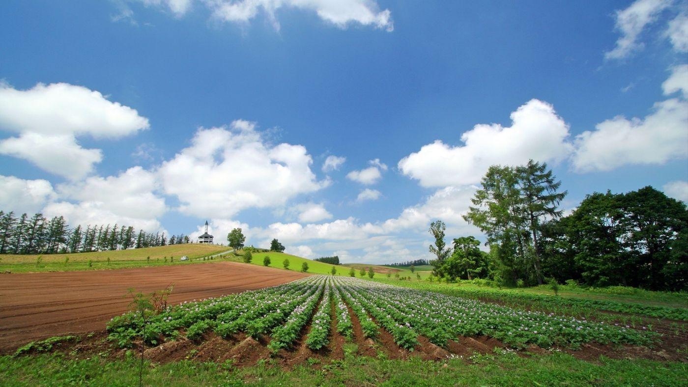 北海道绿色农耕壁纸 手机移动版