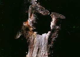 高清晰枯树干壁纸