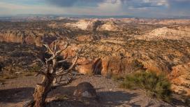 沙漠的岩石木材厂