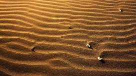 金色的沙丘
