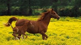 奔跑的骏马与马驹