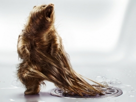 让他们自由地奔跑-被窨井盖困住的3D头发丝动物