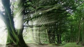树木的大自然光爆