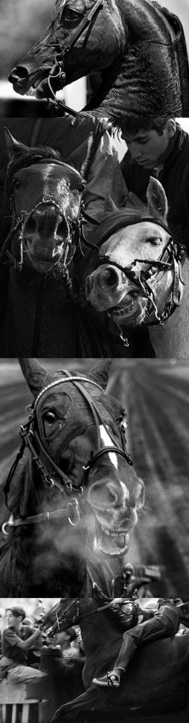 世界各地的马