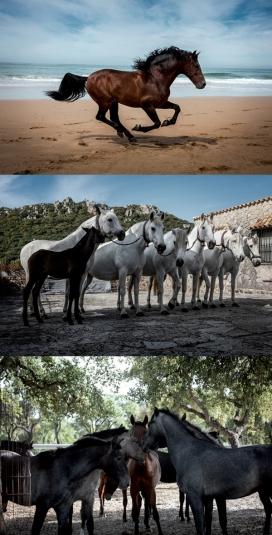 REGLAS Y PASION-马场纪实-记录来自西班牙纯正血统品种骏马驯化过程