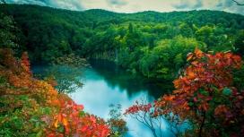 绿森林红叶河