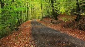 高清晰森林赛道路壁纸