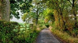 高清晰森林篱笆围栏绿荫路壁纸