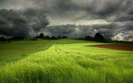 高清晰乌云下的绿草壁纸