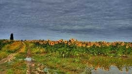 阳光明媚的鲜花深云路