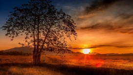 马来西亚日落的树