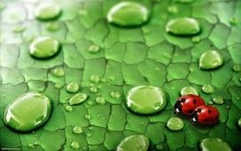 https://www.2008php.com/高清晰带水珠绿色叶子的红色瓢虫