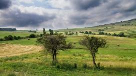 罗马尼亚淡水河树风暴