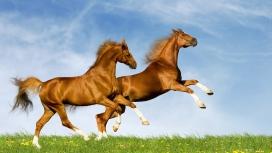 高清晰两只奔跑跳跃的骏马壁纸