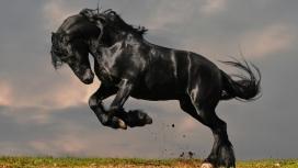 华丽的黑色马