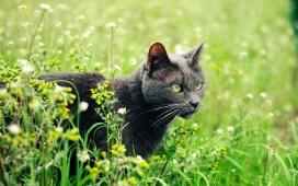花丛中的黑猫