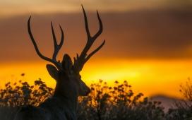 https://www.2008php.com/夕阳下的麋鹿剪影壁纸