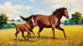 在练习跑步的小马驹