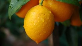 高清晰黄色柠檬水果壁纸