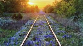 夕阳下长满紫色野花的铁路