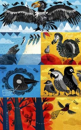 Birds鸟插画设计