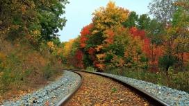 秋季森林火车轨道