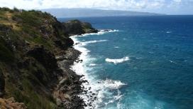 令人惊叹的海洋植物崖