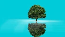 蓝湖树倒影壁纸