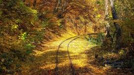 阳光下的秋季森林铁路壁纸